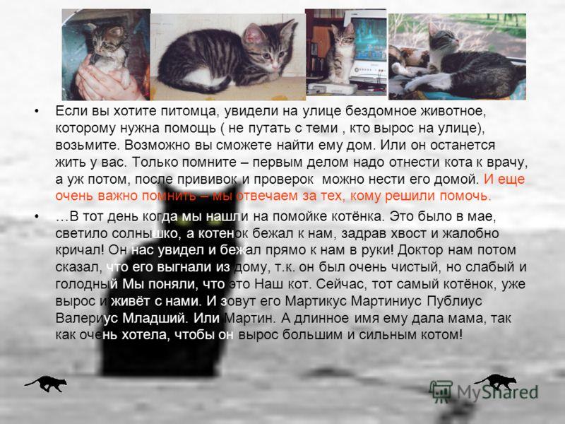 Если вы хотите питомца, увидели на улице бездомное животное, которому нужна помощь ( не путать с теми, кто вырос на улице), возьмите. Возможно вы сможете найти ему дом. Или он останется жить у вас. Только помните – первым делом надо отнести кота к вр