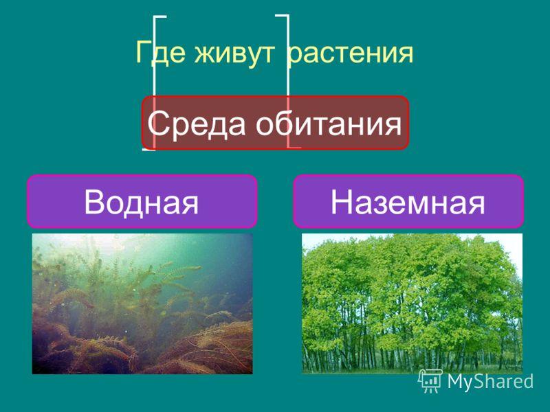 Где живут растения Среда обитания НаземнаяВодная
