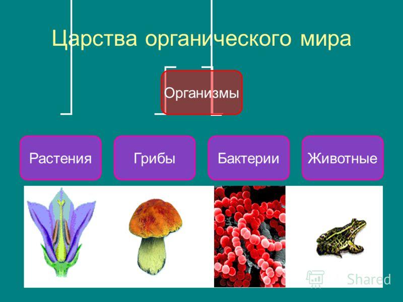 Царства органического мира Организмы ГрибыРастенияБактерииЖивотные