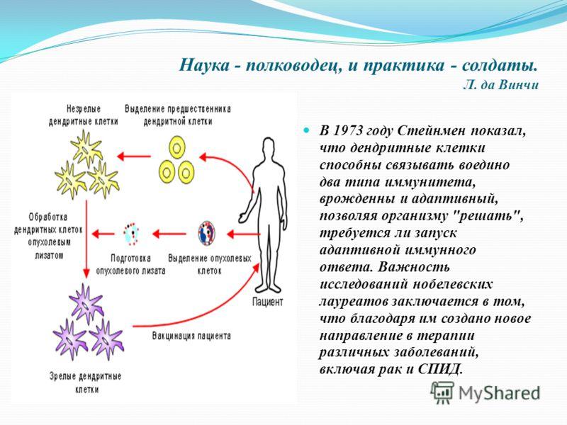 Наука - полководец, и практика - солдаты. Л. да Винчи В 1973 году Стейнмен показал, что дендритные клетки способны связывать воедино два типа иммунитета, врожденны и адаптивный, позволяя организму