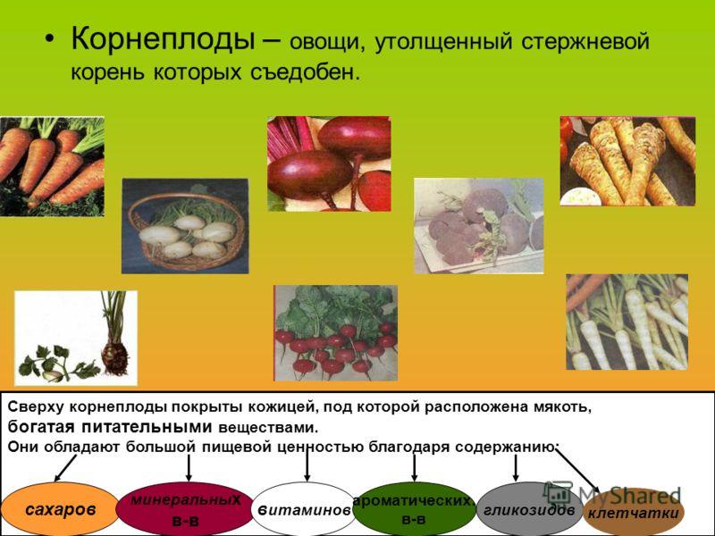 Корнеплоды – овощи, утолщенный стержневой корень которых съедобен. Сверху корнеплоды покрыты кожицей, под которой расположена мякоть, богатая питательными веществами. Они обладают большой пищевой ценностью благодаря содержанию: сахаров минеральны х в