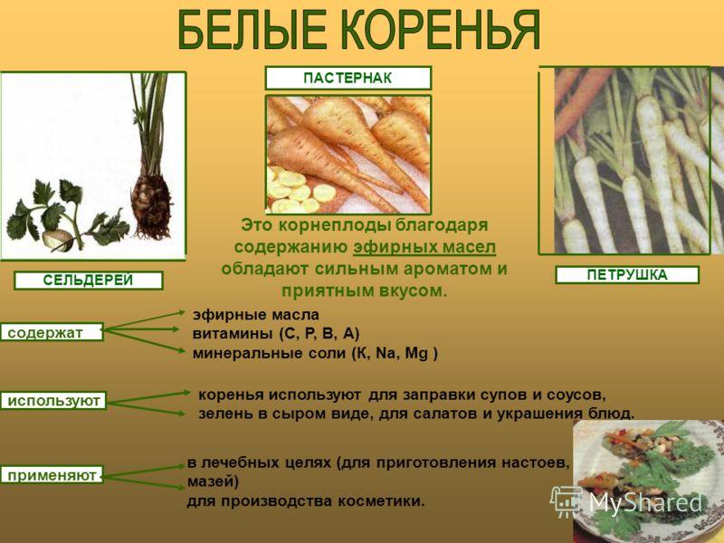 ПЕТРУШКА СЕЛЬДЕРЕЙ ПАСТЕРНАК Это корнеплоды благодаря содержанию эфирных масел обладают сильным ароматом и приятным вкусом. содержат используют применяют эфирные масла витамины (С, Р, В, А) минеральные соли (К, Nа, Мg ) коренья используют для заправк