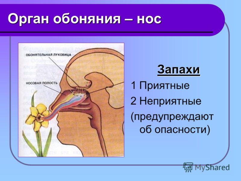 Орган обоняния – нос Запахи 1 Приятные 2 Неприятные (предупреждают об опасности)