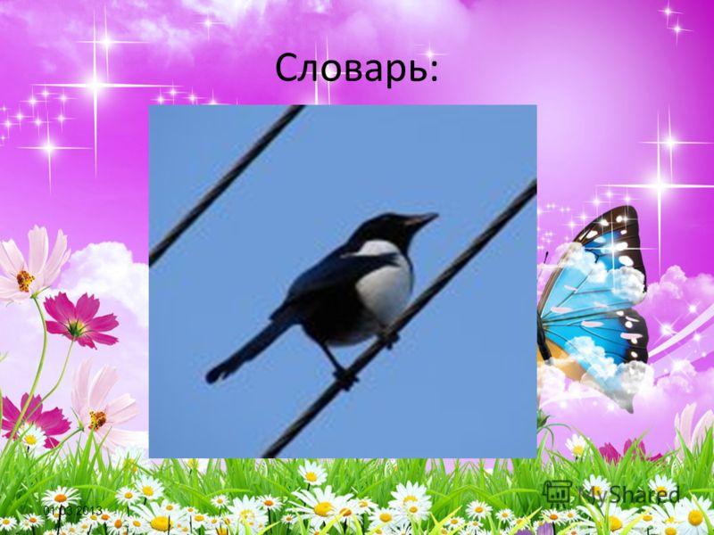 01.03.2013 Словарь: СОРОКА