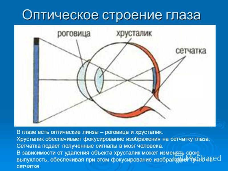 Оптическое строение глаза В глазе есть оптические линзы – роговица и хрусталик. Хрусталик обеспечивает фокусирование изображения на сетчатку глаза. Сетчатка подает полученные сигналы в мозг человека. В зависимости от удаления объекта хрусталик может