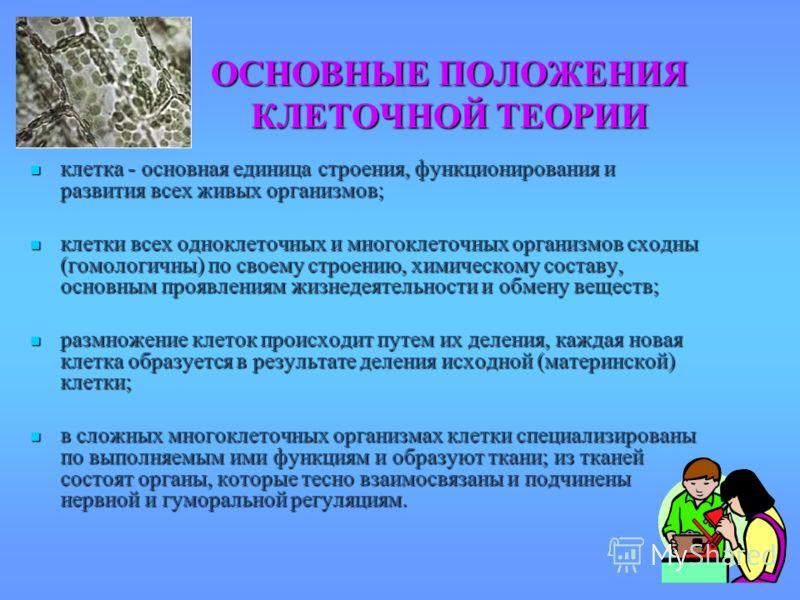 ОСНОВНЫЕ ПОЛОЖЕНИЯ КЛЕТОЧНОЙ ТЕОРИИ клетка - основная единица строения, функционирования и развития всех живых организмов; клетка - основная единица строения, функционирования и развития всех живых организмов; клетки всех одноклеточных и многоклеточн