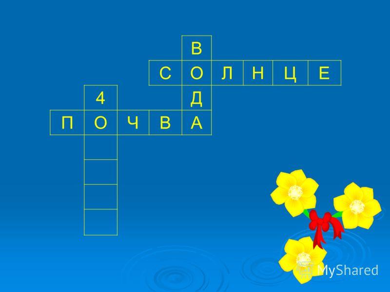 В СОЛНЦЕ 4Д ПОЧВА