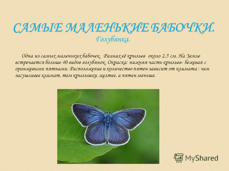 САМЫЕ МАЛЕНЬКИЕ БАБОЧКИ. Голубянка. Одна из самых маленьких бабочек. Размах её крыльев около 2,5 см. На Земле встречается больше 40 видов голубянок. Окраска: нижняя часть крыльев- бежевая с оранжевыми пятнами. Расположение и количество пятен зависит