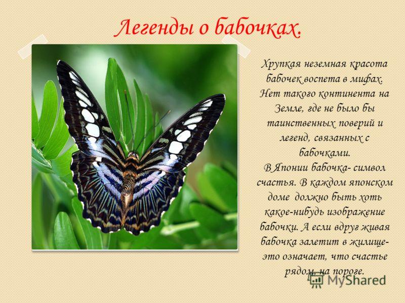 Легенды о бабочках. Хрупкая неземная красота бабочек воспета в мифах. Нет такого континента на Земле, где не было бы таинственных поверий и легенд, связанных с бабочками. В Японии бабочка- символ счастья. В каждом японском доме должно быть хоть какое