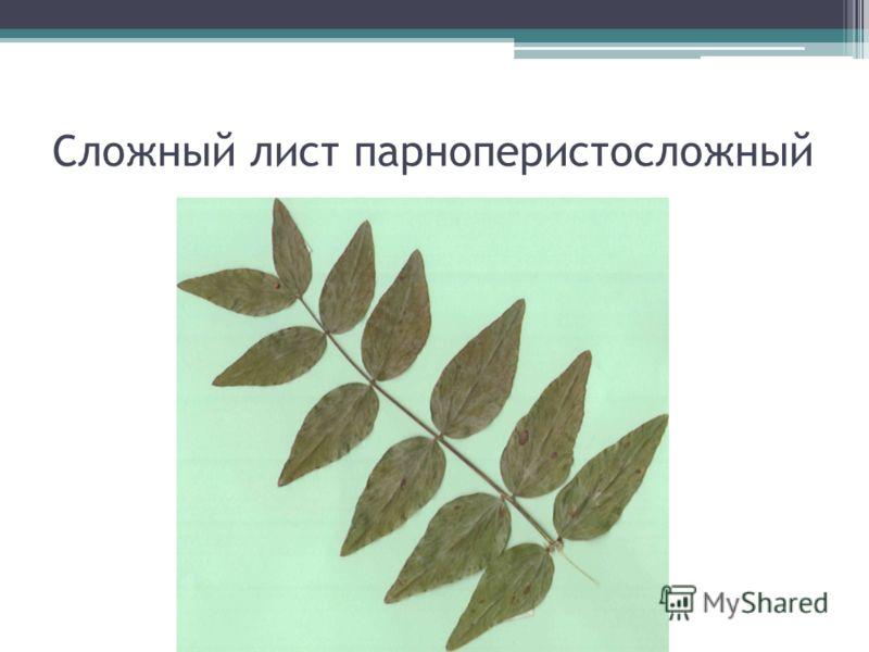 Сложный лист парноперистосложный