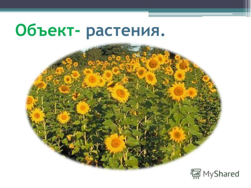 Объект- растения.