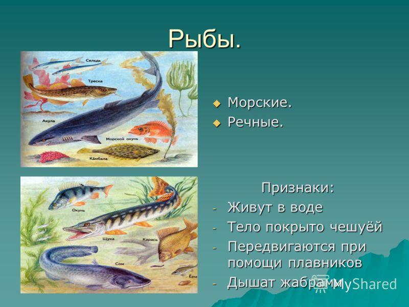 Рыбы. Морские. Морские. Речные. Речные. Признаки: - Живут в воде - Тело покрыто чешуёй - Передвигаются при помощи плавников - Дышат жабрами