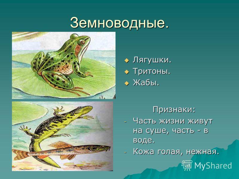 Земноводные. Лягушки. Лягушки. Тритоны. Тритоны. Жабы. Жабы. Признаки: - Часть жизни живут на суше, часть - в воде. - Кожа голая, нежная.