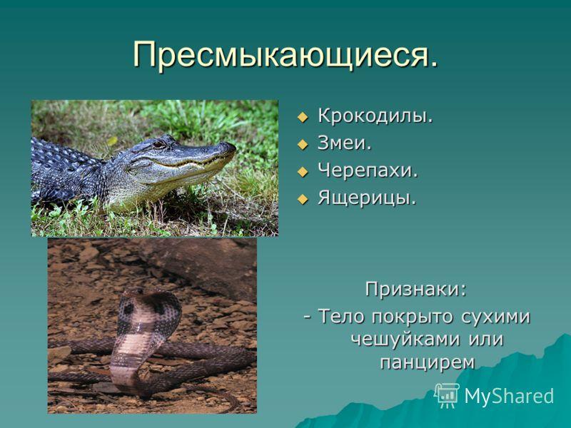 Пресмыкающиеся. Крокодилы. Крокодилы. Змеи. Змеи. Черепахи. Черепахи. Ящерицы. Ящерицы. Признаки: - Тело покрыто сухими чешуйками или панцирем