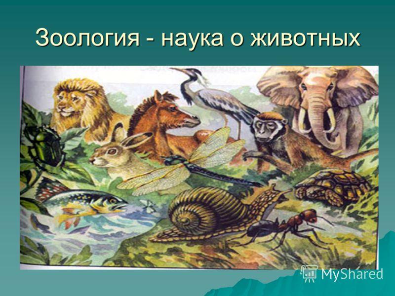 Зоология - наука о животных