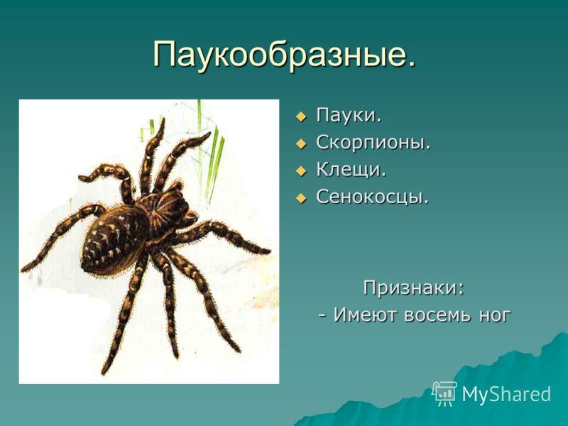 Паукообразные. Пауки. Пауки. Скорпионы. Скорпионы. Клещи. Клещи. Сенокосцы. Сенокосцы. Признаки: - Имеют восемь ног