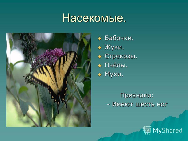 Насекомые. Бабочки. Бабочки. Жуки. Жуки. Стрекозы. Стрекозы. Пчёлы. Пчёлы. Мухи. Мухи. Признаки: - Имеют шесть ног