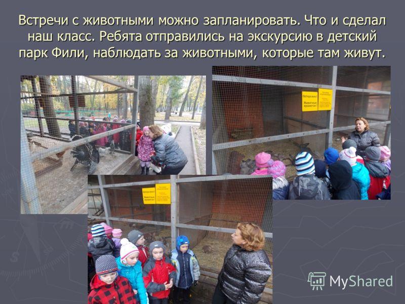 Встречи с животными можно запланировать. Что и сделал наш класс. Ребята отправились на экскурсию в детский парк Фили, наблюдать за животными, которые там живут.