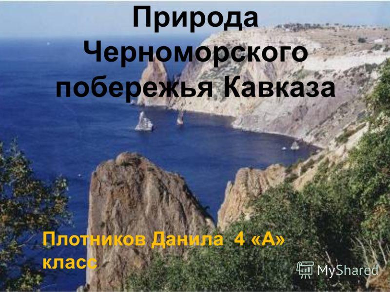 Природа Черноморского побережья Кавказа Плотников Данила 4 «А» класс
