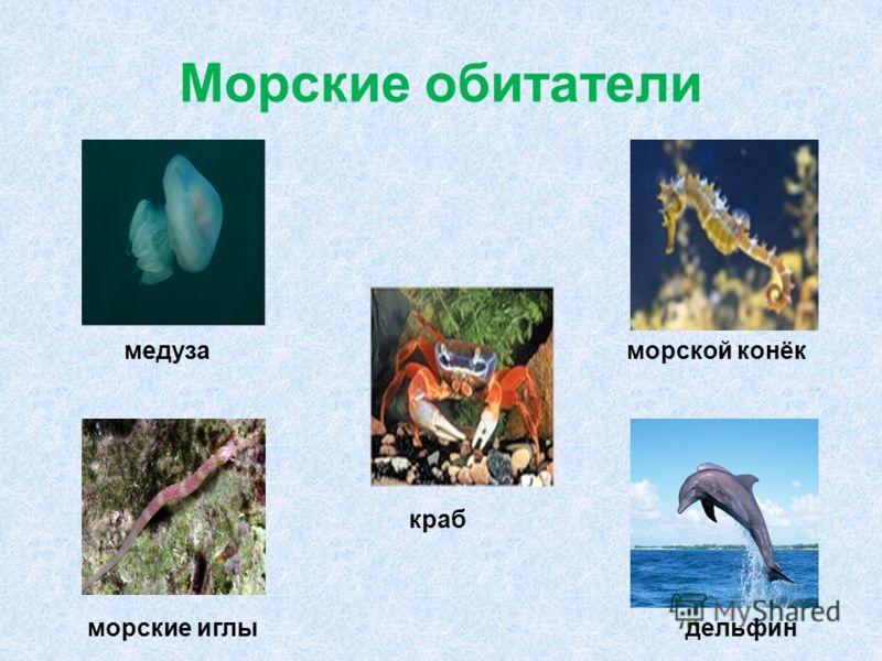 Морские обитатели дельфин краб морские иглы медузаморской конёк
