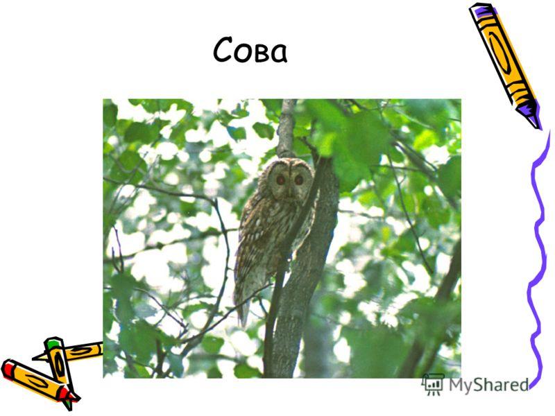 Тема урока многообразие птиц