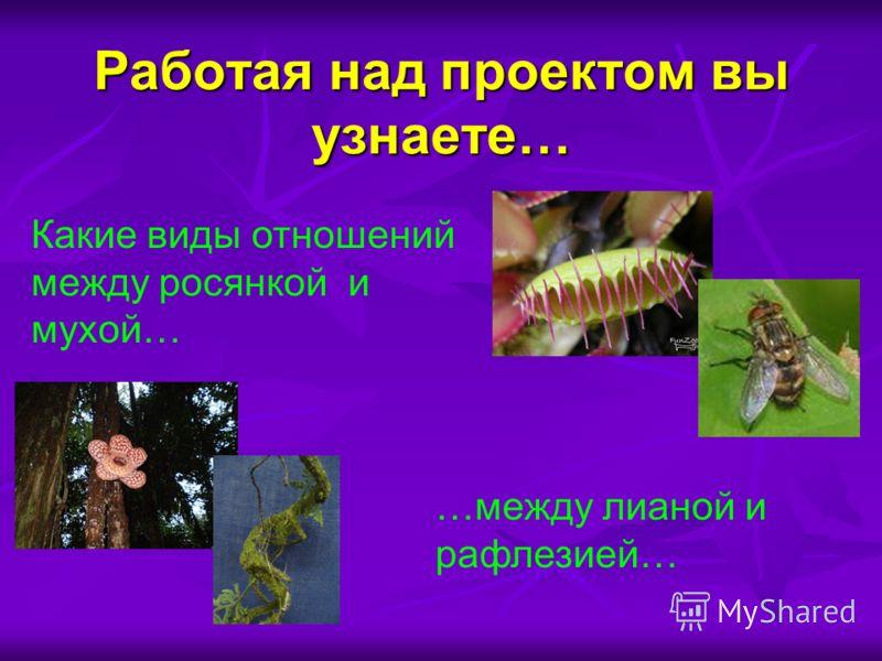 Работая над проектом вы узнаете… Какие виды отношений между росянкой и мухой… …между лианой и рафлезией…