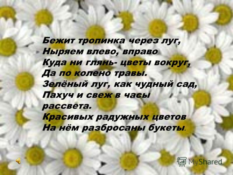 Бежит тропинка через луг, Ныряем влево, вправо Куда ни глянь- цветы вокруг, Да по колено травы. Зелёный луг, как чудный сад, Пахуч и свеж в часы рассвета. Красивых радужных цветов На нём разбросаны букеты.