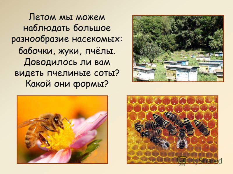 Летом мы можем наблюдать большое разнообразие насекомых: бабочки, жуки, пчёлы. Доводилось ли вам видеть пчелиные соты? Какой они формы?