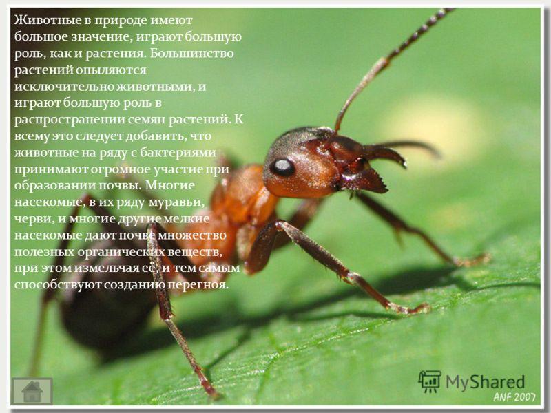 Животные в природе имеют большое значение, играют большую роль, как и растения. Большинство растений опыляются исключительно животными, и играют большую роль в распространении семян растений. К всему это следует добавить, что животные на ряду с бакте