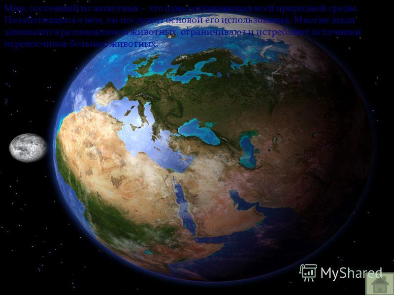 Мир, состоящий из животных – это одна составляющая всей природной среды. Позаботившись о нем, он послужит основой его использования. Многие люди занимаются размножением животных, ограничивают и истребляют источники переносчиков больных животных.