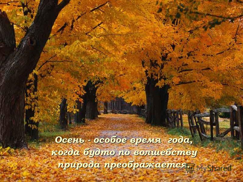 Осень - особое время года, когда будто по волшебству природа преображается.