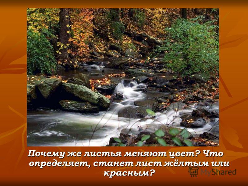 Почему же листья меняют цвет? Что определяет, станет лист жёлтым или красным? Почему же листья меняют цвет? Что определяет, станет лист жёлтым или красным?