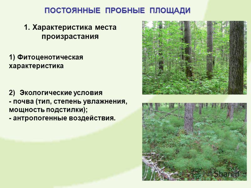 1. Характеристика места произрастания 1) Фитоценотическая характеристика 2) Экологические условия - почва (тип, степень увлажнения, мощность подстилки); - антропогенные воздействия. ПОСТОЯННЫЕ ПРОБНЫЕ ПЛОЩАДИ