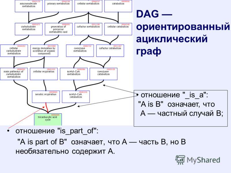 DAG ориентированный ациклический граф отношение is_part_of: A is part of B означает, что А часть В, но В необязательно содержит А. отношение _is_a: A is B означает, что А частный случай В;
