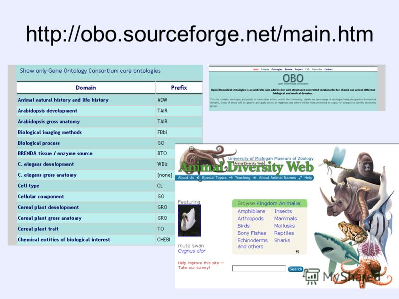 http://obo.sourceforge.net/main.htm