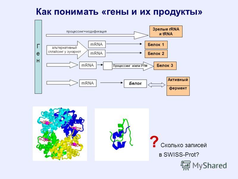 Как понимать «гены и их продукты» ? Сколько записей в SWISS-Prot? ГенГен альтернативный сплайсинг у эукариот mRNA Белок 1 Зрелые rRNA и tRNA mRNA Белок 2 Белок 3 mRNA Активны й процессинг+модификация фермент Белок Процессинг и/или РТМ