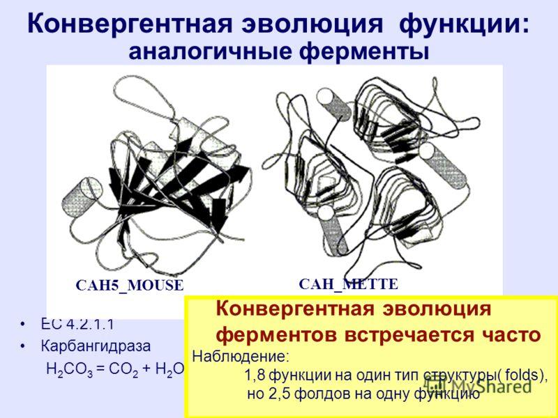 Конвергентная эволюция функции: аналогичные ферменты ЕС 4.2.1.1 Карбангидраза H 2 CO 3 = CO 2 + H 2 O CAH_METTE CAH5_MOUSE Конвергентная эволюция ферментов встречается часто Наблюдение: 1,8 функции на один тип структуры( folds), но 2,5 фолдов на одну