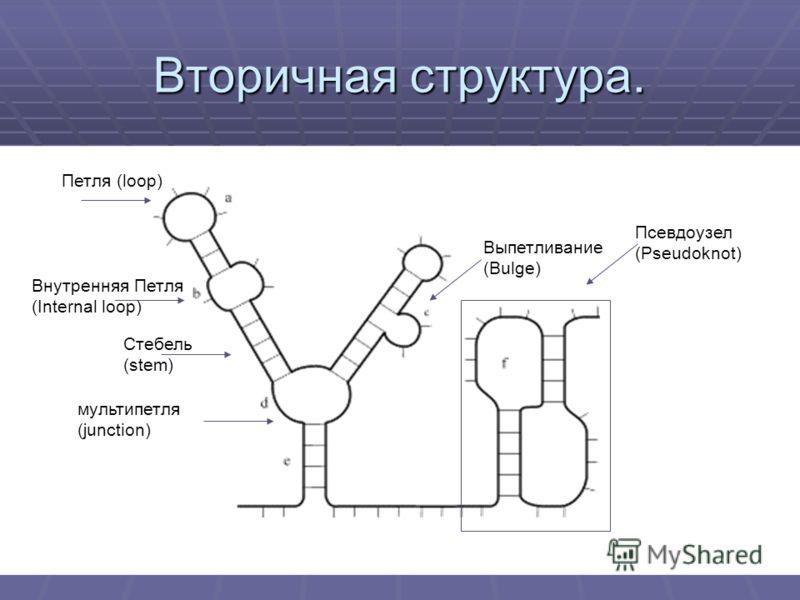Вторичная структура. Петля (loop) Внутренняя Петля (Internal loop) Стебель(stem) мультипетля(junction) Выпетливание(Bulge) Псевдоузел(Pseudoknot)