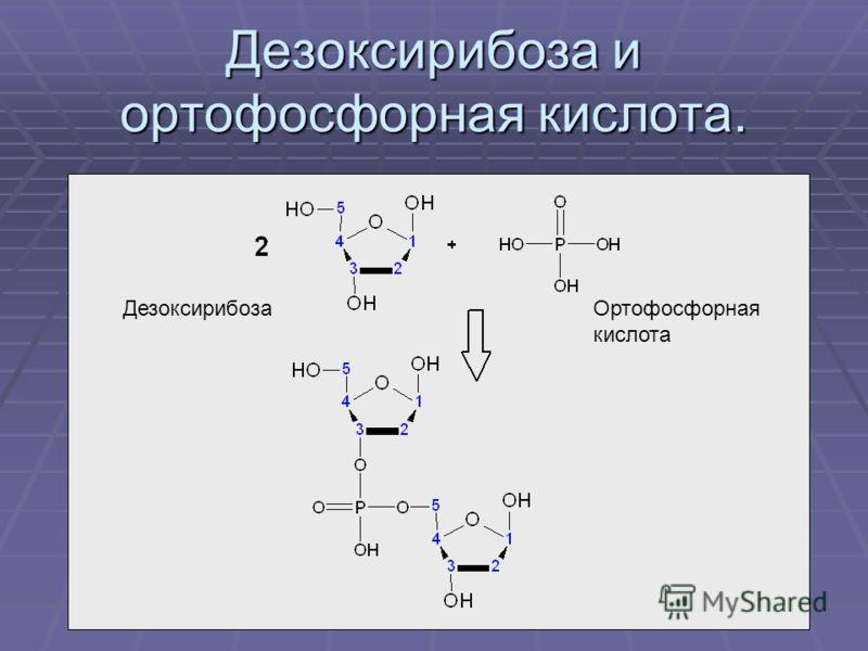 Дезоксирибоза и ортофосфорная кислота. ДезоксирибозаОртофосфорная кислота