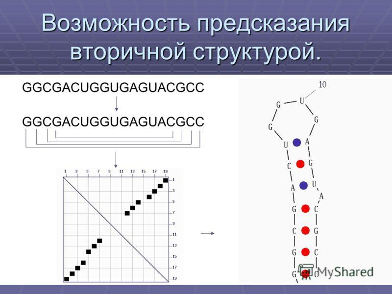 Возможность предсказания вторичной структурой. GGCGACUGGUGAGUACGCC