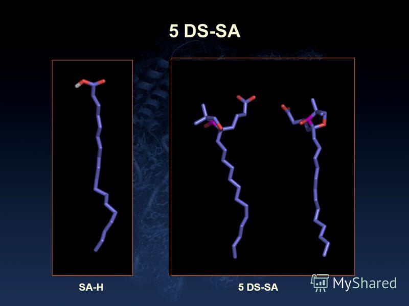 5 DS-SA SA-H