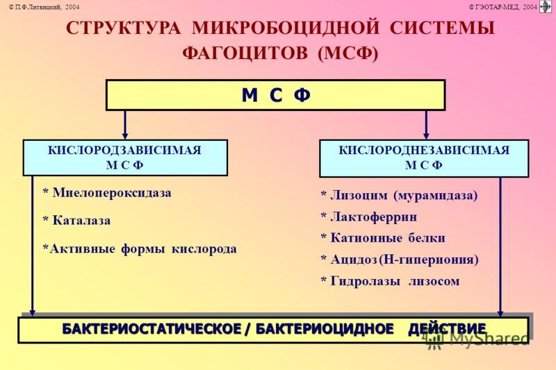 СТРУКТУРА МИКРОБОЦИДНОЙ СИСТЕМЫ ФАГОЦИТОВ (МСФ) М С Ф БАКТЕРИОСТАТИЧЕСКОЕ / БАКТЕРИОЦИДНОЕ ДЕЙСТВИЕ * Миелопероксидаза * Каталаза *Активные формы кислорода * Лизоцим (мурамидаза) * Лактоферрин * Катионные белки * Ацидоз (Н-гипериония) * Гидролазы лиз