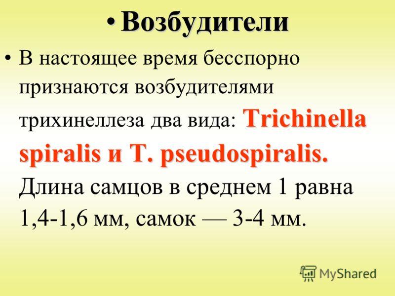 ВозбудителиВозбудители Trichinella spiralis и Т. pseudospiralis.В настоящее время бесспорно признаются возбудителями трихинеллеза два вида: Trichinella spiralis и Т. pseudospiralis. Длина самцов в среднем 1 равна 1,4-1,6 мм, самок 3-4 мм.