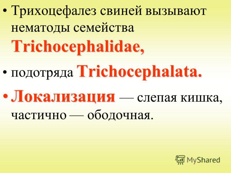 Trichocephalidae,Трихоцефалез свиней вызывают нематоды семейства Trichocephalidae, Trichocephalata.подотряда Trichocephalata. ЛокализацияЛокализация слепая кишка, частично ободочная.