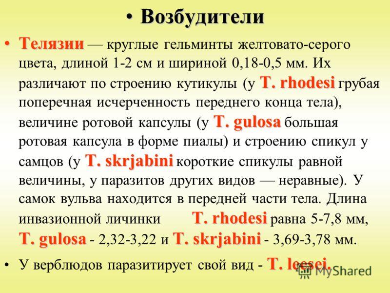 ВозбудителиВозбудители Телязии Т. rhodesi Т. gulosa Т. skrjabini Т. rhodesi Т. gulosaТ. skrjabiniТелязии круглые гельминты желтовато-серого цвета, длиной 1-2 см и шириной 0,18-0,5 мм. Их различают по строению кутикулы (у Т. rhodesi грубая поперечная