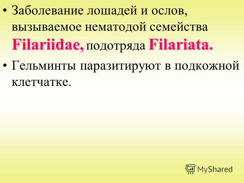 Filariidae,Filariata.Заболевание лошадей и ослов, вызываемое нематодой семейства Filariidae, подотряда Filariata. Гельминты паразитируют в подкожной клетчатке.