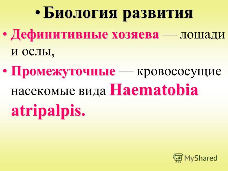 Биология развитияБиология развития Дефинитивные хозяеваДефинитивные хозяева лошади и ослы, Промежуточные Haematobia atripalpis.Промежуточные кровососущие насекомые вида Haematobia atripalpis.