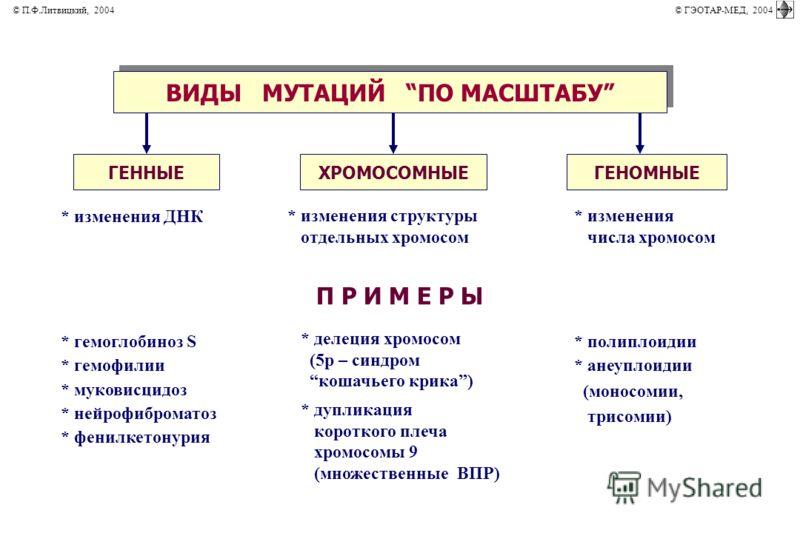 ВИДЫ МУТАЦИЙ ПО МАСШТАБУ * изменения ДНК * изменения структуры отдельных хромосом * изменения числа хромосом П Р И М Е Р Ы * гемоглобиноз S * гемофилии * муковисцидоз * нейрофиброматоз * фенилкетонурия * делеция хромосом (5р – синдром кошачьего крика