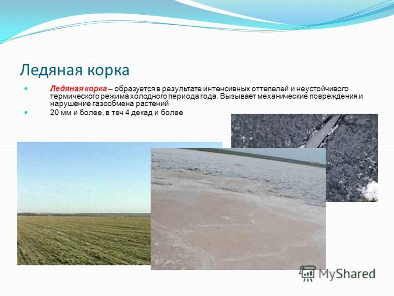 Ледяная корка Ледяная корка – образуется в результате интенсивных оттепелей и неустойчивого термического режима холодного периода года. Вызывает механические повреждения и нарушение газообмена растений 20 мм и более, в теч 4 декад и более