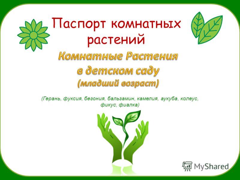 Паспорт комнатных растений (Герань, фуксия, бегония, бальзамин, камелия, аукуба, колеус, фикус, фиалка)